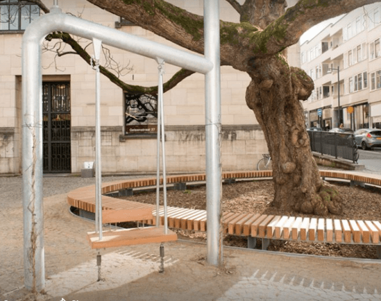 Urban swing supports ancient tree