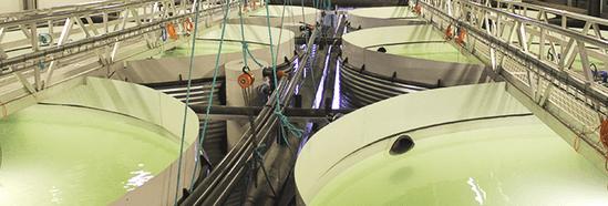 Recirculating Aquaculture System