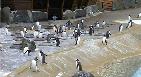 Penguin enclosure at Edinburgh Zoo