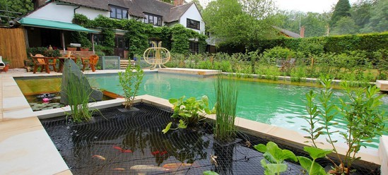 Natural swimming pool and koi pond clear water revival for Swimming pool koi pond conversion