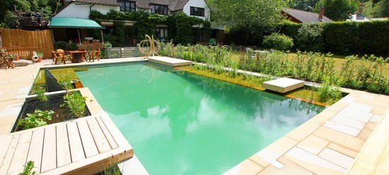 Natural swimming pool and koi pond clear water revival for Koi pond and swimming pool