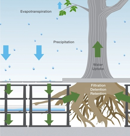 Silva Cell Integrated Tree And Stormwater System