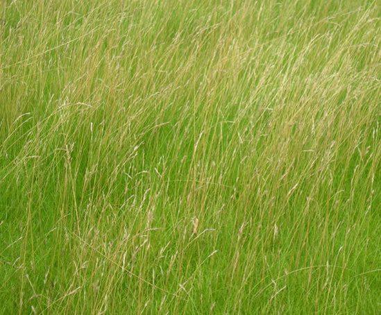 Low maintenance green roof grass mats lindum turf esi for Best low maintenance grass