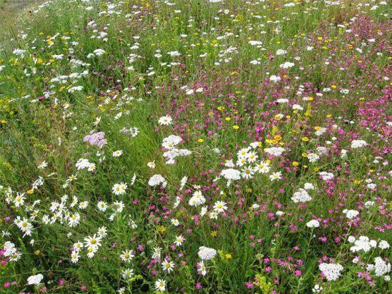 Lindum Wildflower Mat for Green Roofs