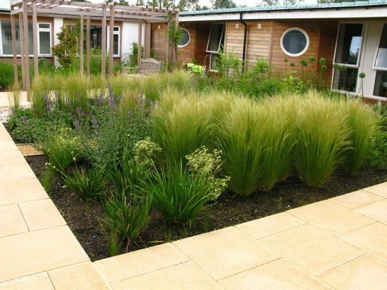 Sensory planting for public courtyard, Horder Centre