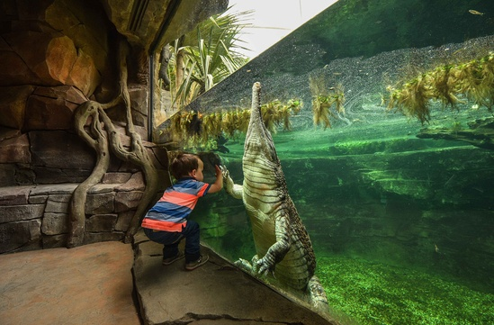 Crocodile enclosure, Chester Zoo