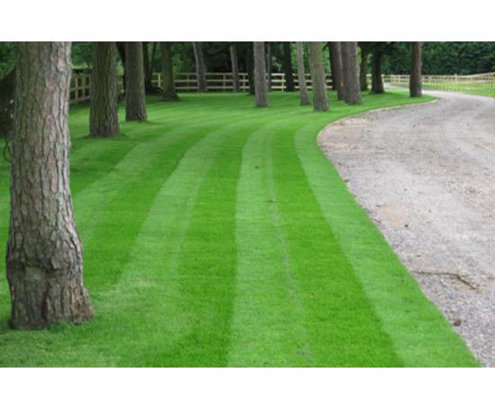 Pro 1 Soil-less Lawn Turf | Wildflower Turf Ltd | ESI External Works