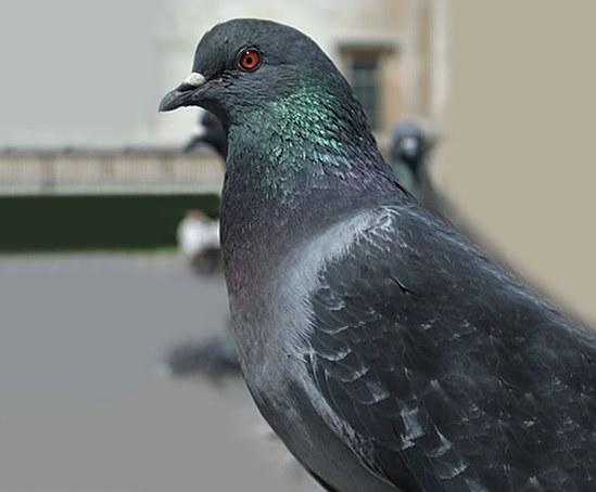 Bird coil system