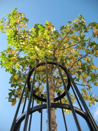 One of GreenBlue Urban's range of metal tree guards