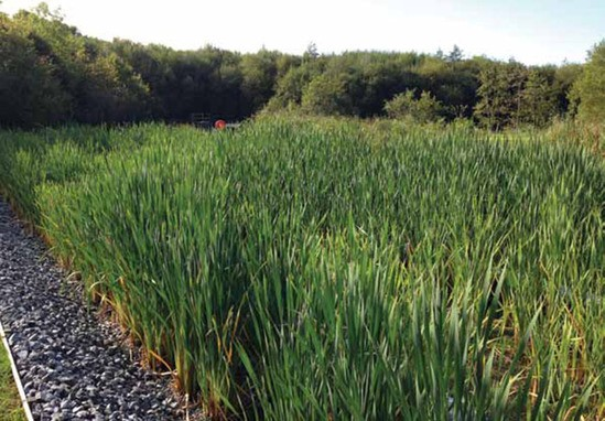 ARM aerated vertical reedbeds at Highland Spring