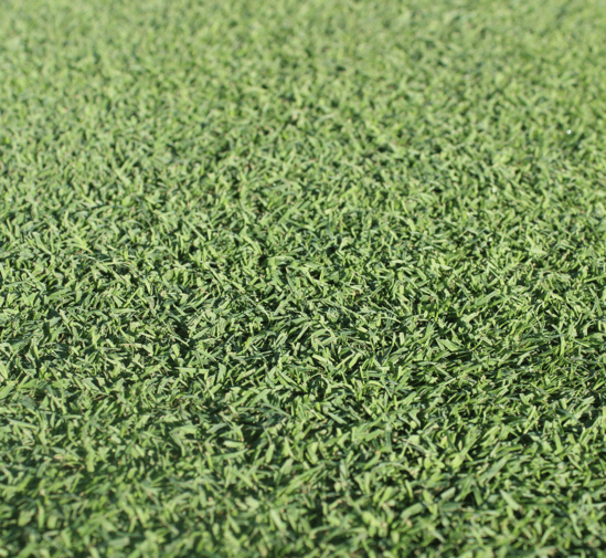Forefront Greens
