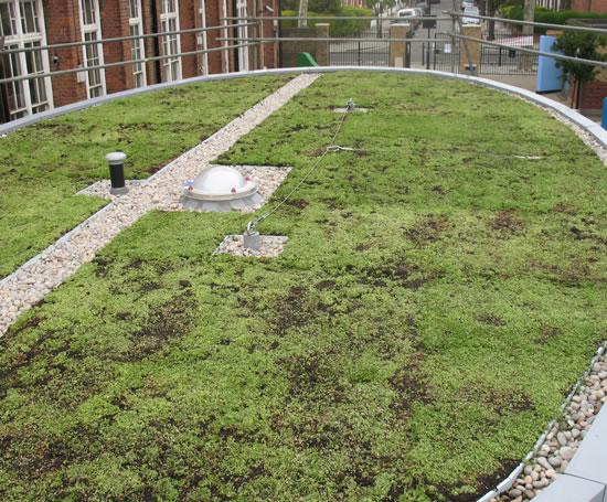 eco roof green roof system bailey esi building design. Black Bedroom Furniture Sets. Home Design Ideas