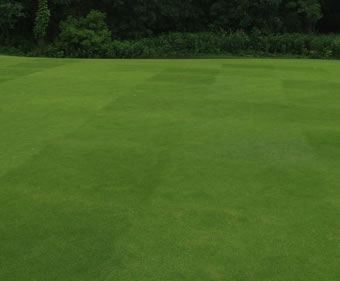 Pro Master 45 Tee & Fairway Plus grass seed | DLF Seeds ...