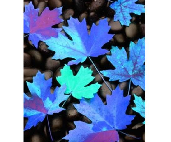Wall Coverings Product : Custom printed semi gloss wall coverings digetex esi