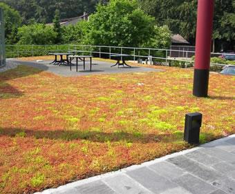 Roof gardens - extensive sedum roof