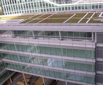 Roof gardens - extensive green roof