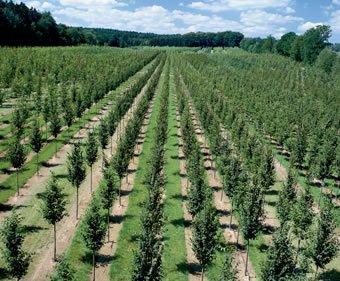 Deciduous trees
