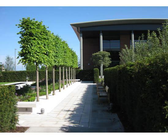 Angel Field Garden Liverpool Hope University Lorenz Von