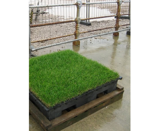 how to prepare hard ground for grass seed