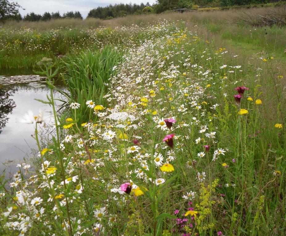 Lindum Wildflower turf