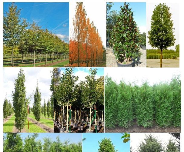 Top 10 Screening Trees Practicality Brown Esi External Works