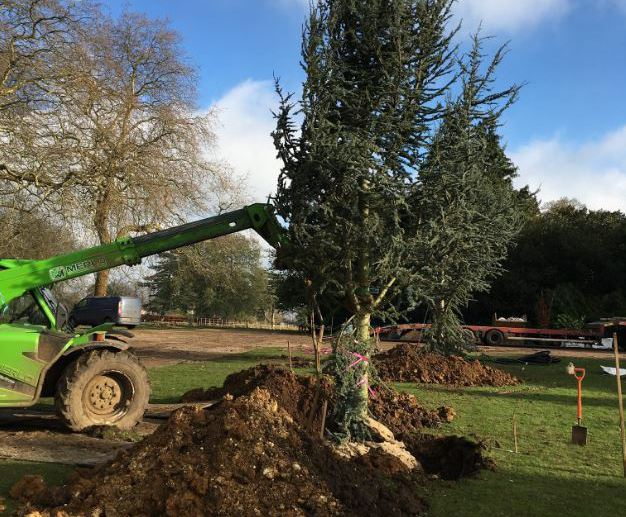 300 trees planted at estate in Essex