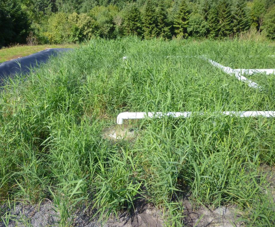 Phragmifiltre® reedbeds for sewage treatment
