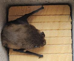 ACO Bat Box