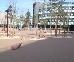 Tree pits, urban planting in public areas