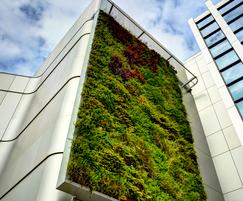 Living wall, University of Bristol Life Sciences