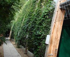Webnet green wall after plants have been established