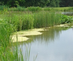 Aqualife can help with wetland habitat creation