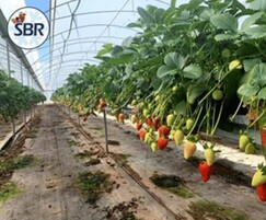 Turkish Grower SBR Agricultural Products uses WET Kit