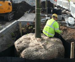Semi-mature tree installation service offered