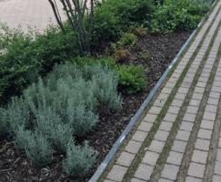 Ornamental shrub and hedge planting