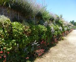 Eco Barrier with established plants
