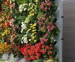 Vertical wall planter system creates colourful displays