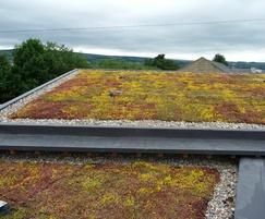 Sedum Mat Green Roof on private house