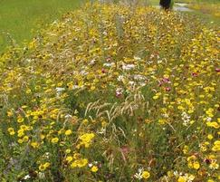 Wildflower & Perennial Turf from Lindum