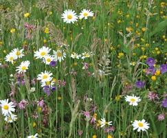 Wildflower & perennial mixtures can be grown to order