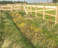 Lindum Wildflower turf - RHS Harlow Carr
