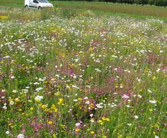 Wildflower turf adds colour and biodiversity to a site