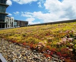 Lindum Sedum Mat on green roof