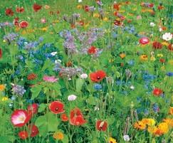 DLF Seeds: New Masterline 'Colour Boost' flower mixtures