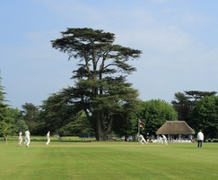 DFL Seeds mixtures used for Goodwood cricket field