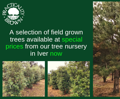 Practicality Brown: Top quality rootball trees - available now
