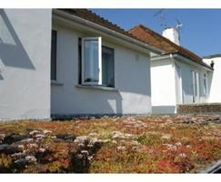 Domestic green roof