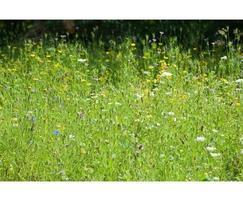 MeadowMat wild flower meadow