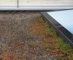 Poorly maintained green roof