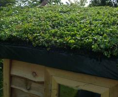 Close up of the sedum green roof